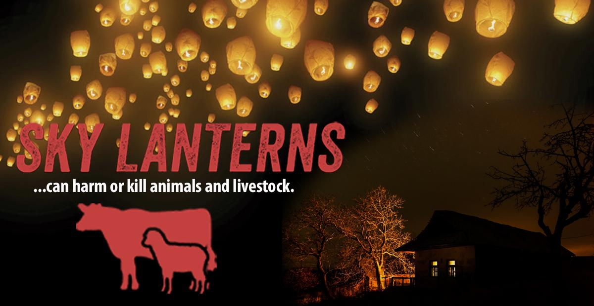 #skylanterns can harm or kill livestock. Please dont release sky lanterns - make it a happy #NewYear for animals too! http://t.co/zM04IO7cCL