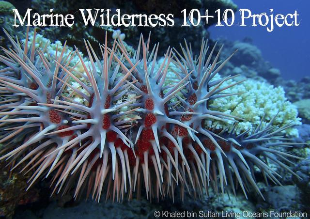 We strive for beautiful, healthy, abundant wilderness in our #oceans & seas http://t.co/y7nyjU7hhu  #marinewilderness http://t.co/TYFmkJaLn2