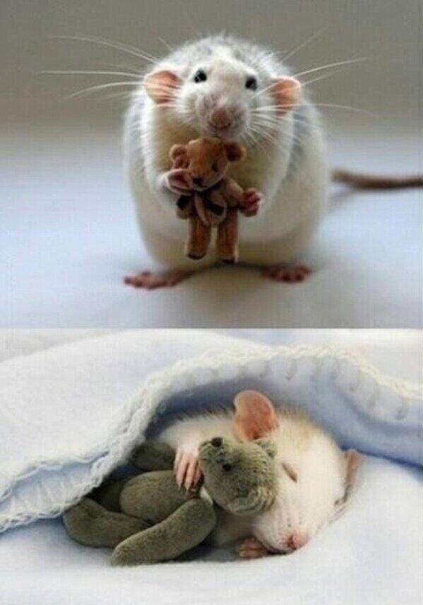 For anyone feeling a bit sad, here's a picture from a woman who makes Teddy Bears for her pet mouse. http://t.co/XsJJjL9Zv5