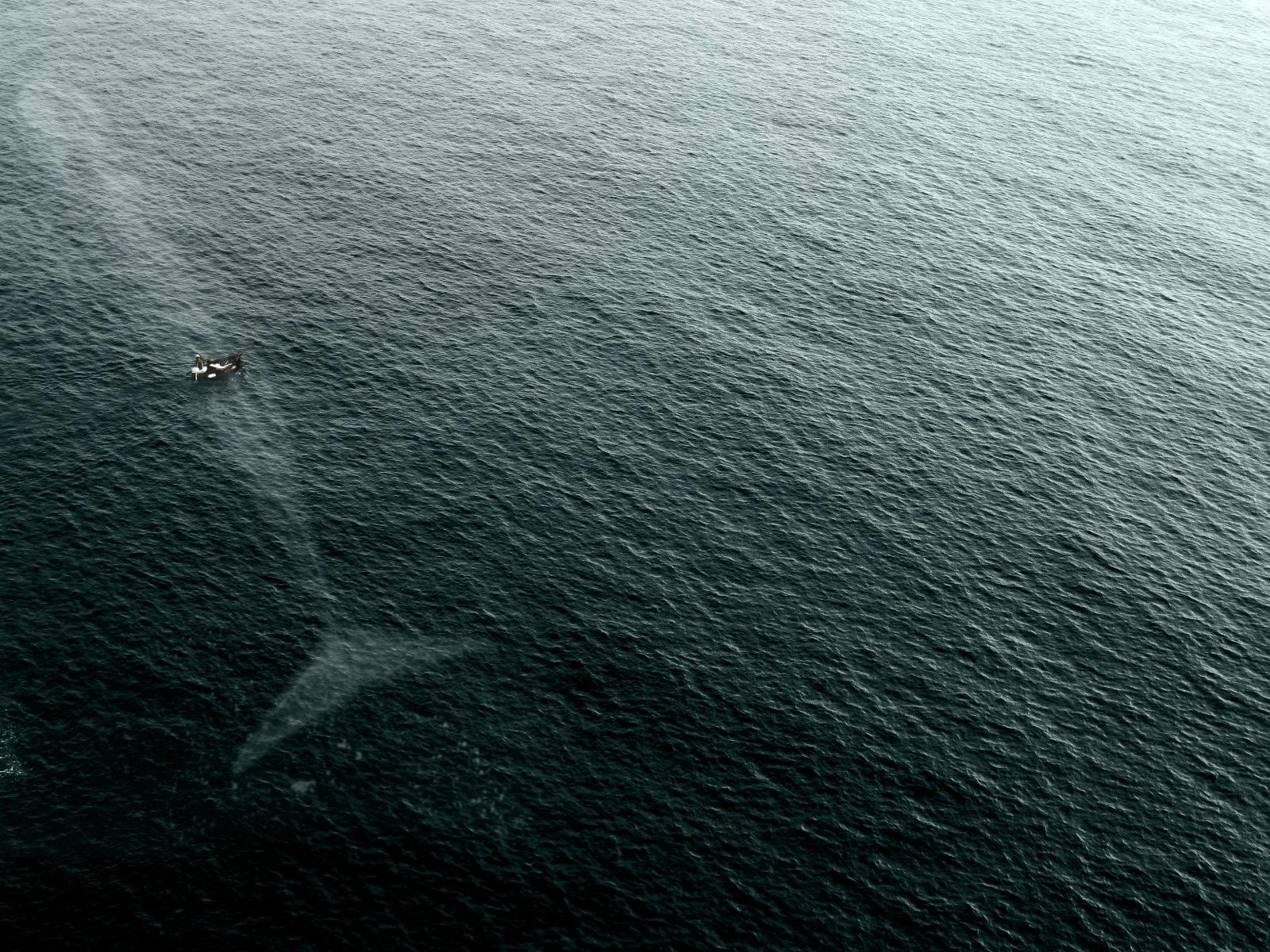 Why I'm scared of the ocean: http://t.co/sqcePrdYf3