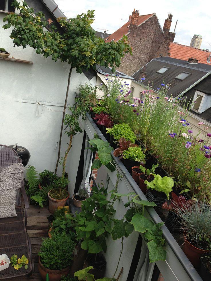 #Stadslandbouwers kunnen het dak op om meer groenten te kweken - #stadslandbouw @Tekenjetuin @Kiemkracht @GMJD030 http://t.co/xkqkmV1TOJ