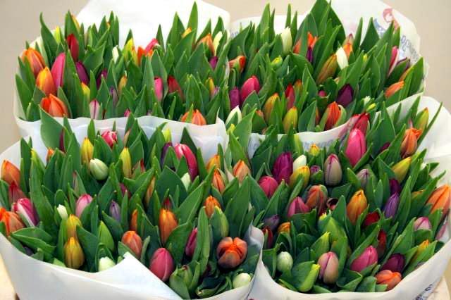 Vind u 't ook zo kaal in huis zonder kerstboom? Tijd om bossen met #Tulpen in huis te halen. Fleurt alles weer op! :) http://t.co/ixpS42tTwO