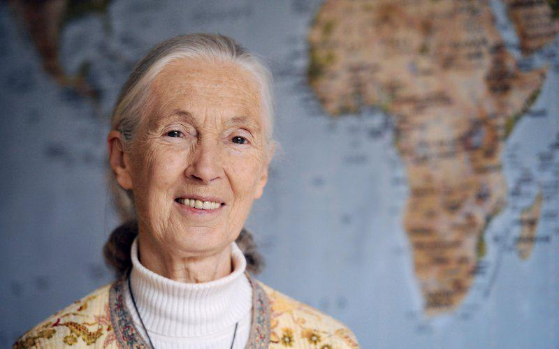 10 Inspiring New Year's Resolutions From #JaneGoodall http://t.co/YAUuOcQ3Os #wildlife #africa #primates #apes http://t.co/BuriPN2DGL