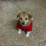 RT @tinkerbell9958: Dog lovers alert . Plz share n help this baby find a home . Rescued from streets of delhi . Plz help thanx http://t.co/…