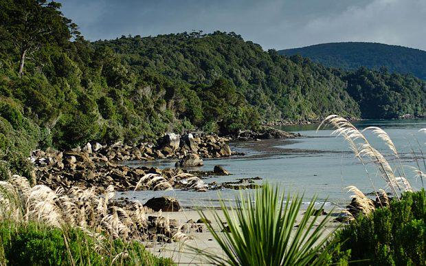 New Zealand's forgotten island: this pristine wilderness merits a closer look @PureNewZealand