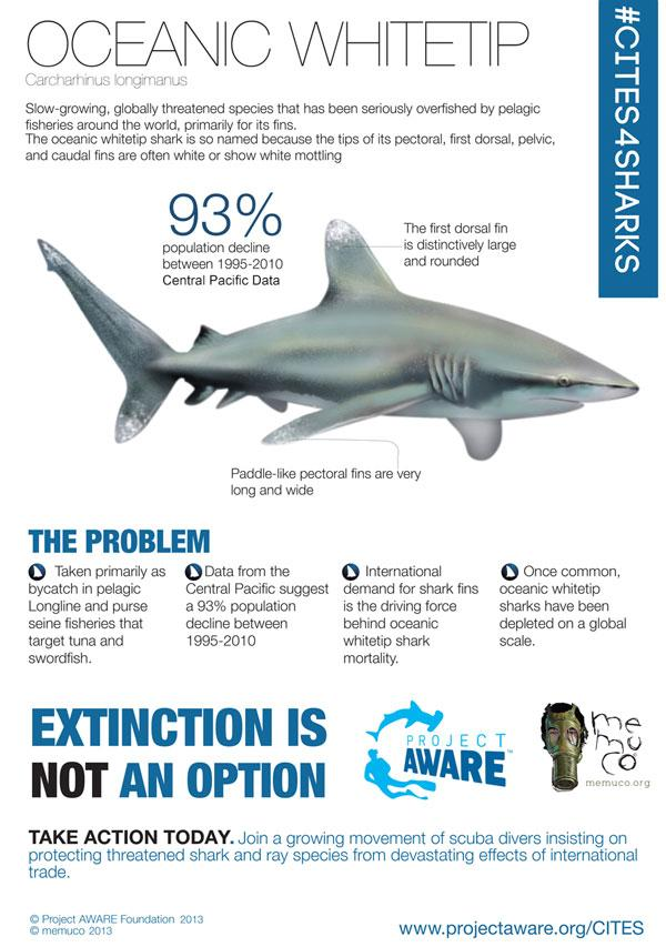 "#savesharks ""@saveourseas: graphic from @projectaware. Oceanic whitetips are suffering huge population declines. http://t.co/NMhbx19zFF"""