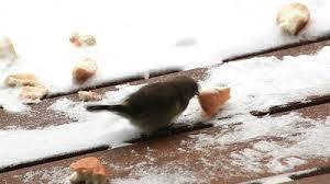 Kuşlar için penceremizin önüne ekmek parçaları koymayı unutmayalım! http://t.co/EEkkevDNST