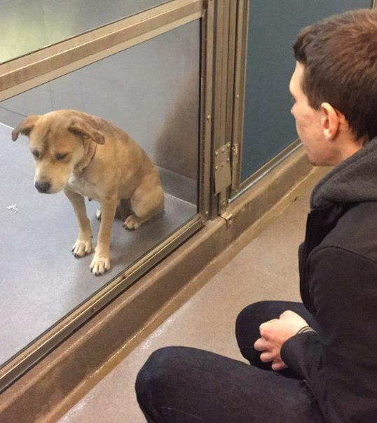 Взяли пса из приюта. Разница в один день http://t.co/3lsytJuKNi
