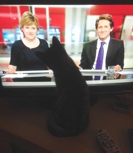 Susie Fowler-Watt (@susiefowlerwatt): A feline fan! According to its owner, this 8 month old kitten loves watching @BBCLookEast http://t.co/tCxiKu8XKh