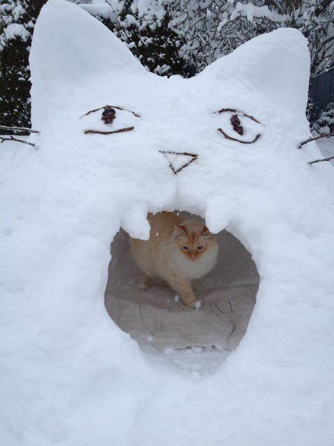 Kitty snow fort http://t.co/Cq0xg8QJCp