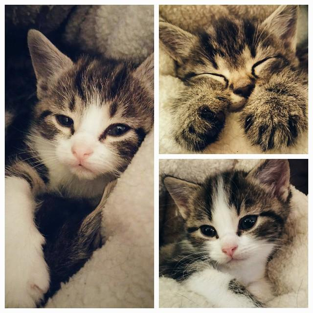 My cat had three little kittens http://t.co/tJ7xpfYoCm