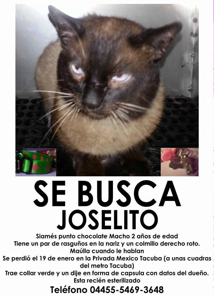 Se busca Joselito perdido #Metro #Tacuba, recién esterilizado, por favor RT grx. @UribeMerle @PrrosPerdidosMX #gatos http://t.co/kKhApi8wKt