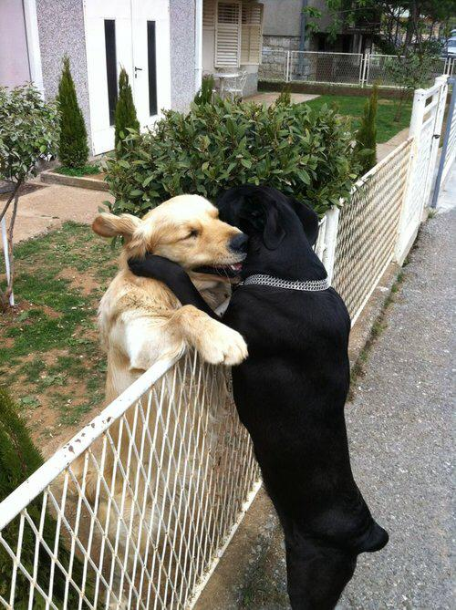 It's #NationalHugDay? Fences don't keep dogs apart. They let them know where to meet! http://t.co/bFsqjaQbvy