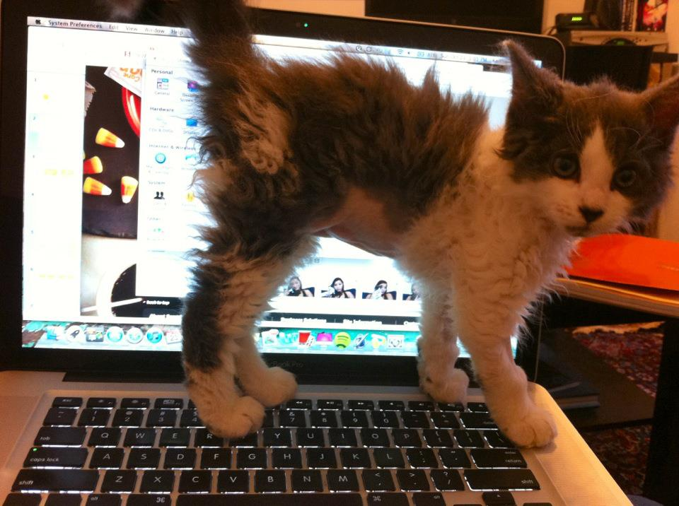 Shaggy kitty http://t.co/5mN24B013f