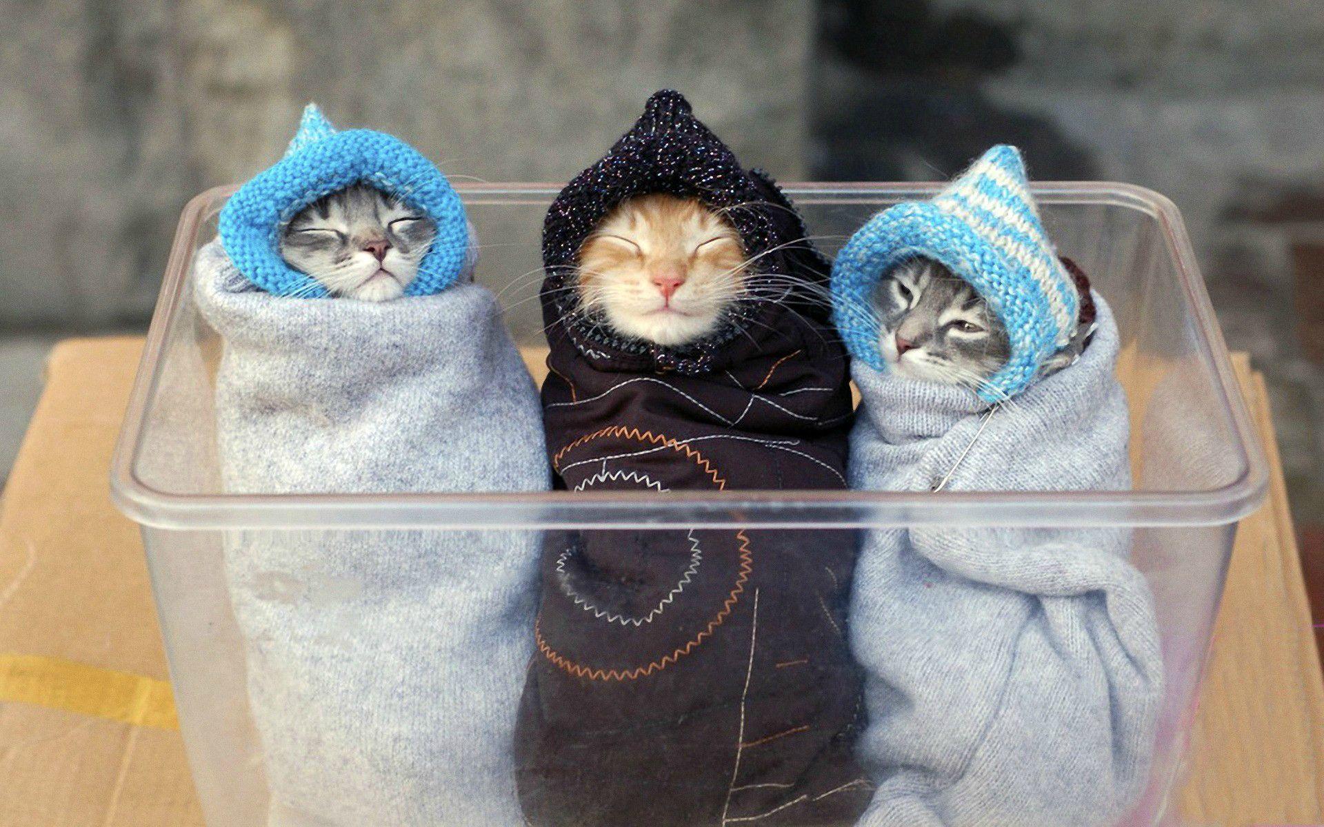 3 Winter Burritos Please! http://t.co/ZFhgu4ncSB