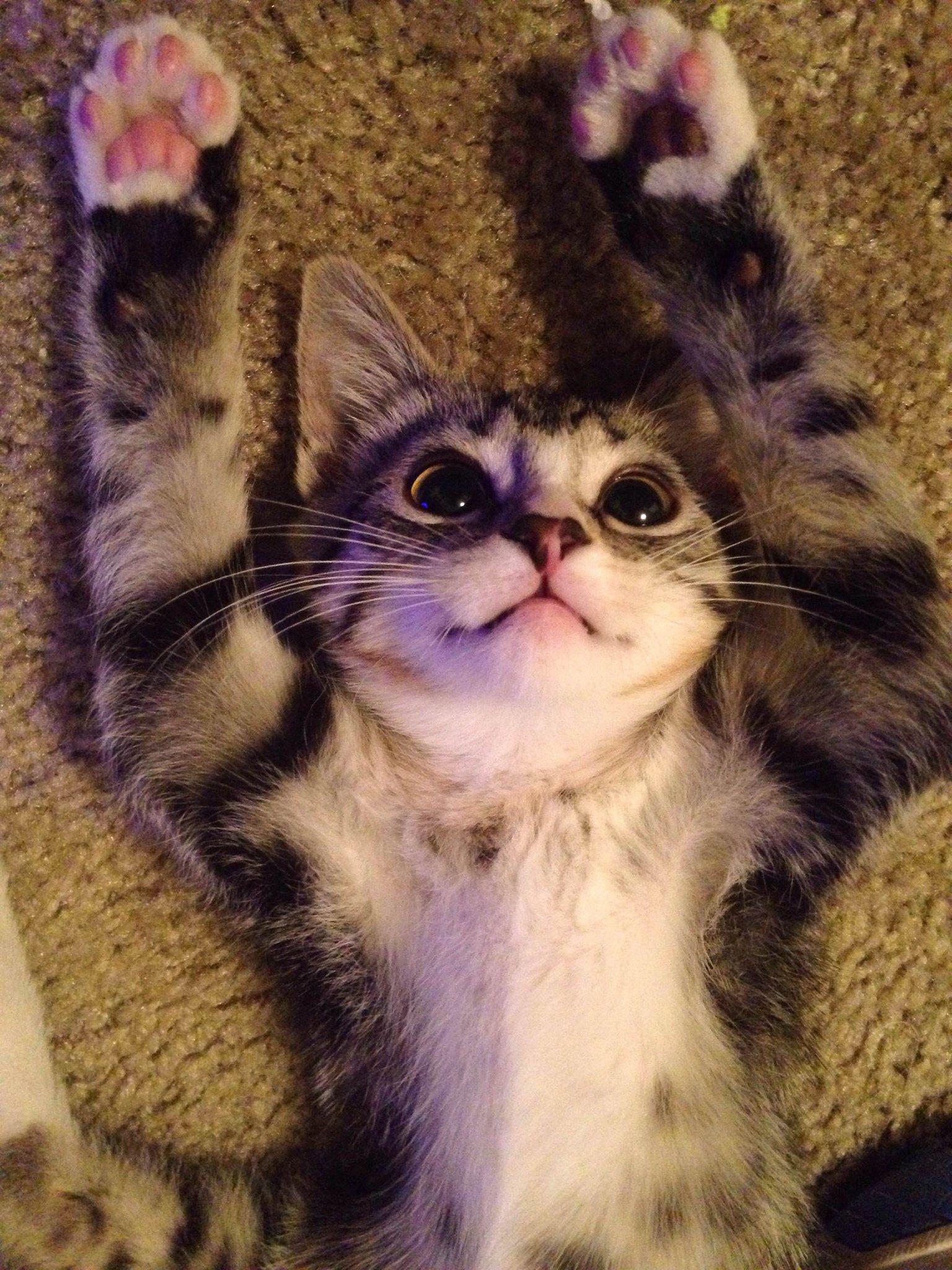 Derp cat http://t.co/JJr4ghETXt