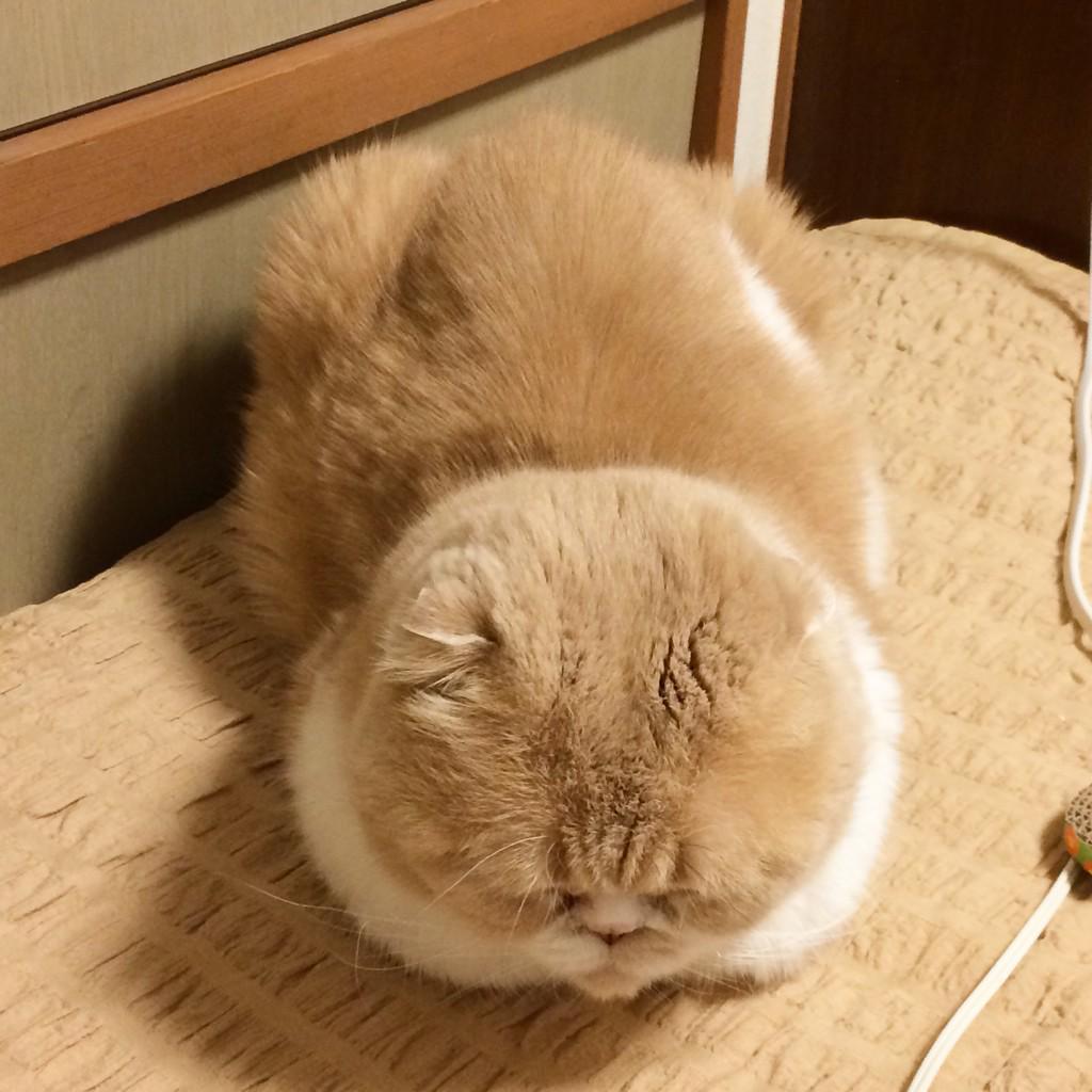ウトウトNOW(写真3枚) http://t.co/I1RM1MSiGk