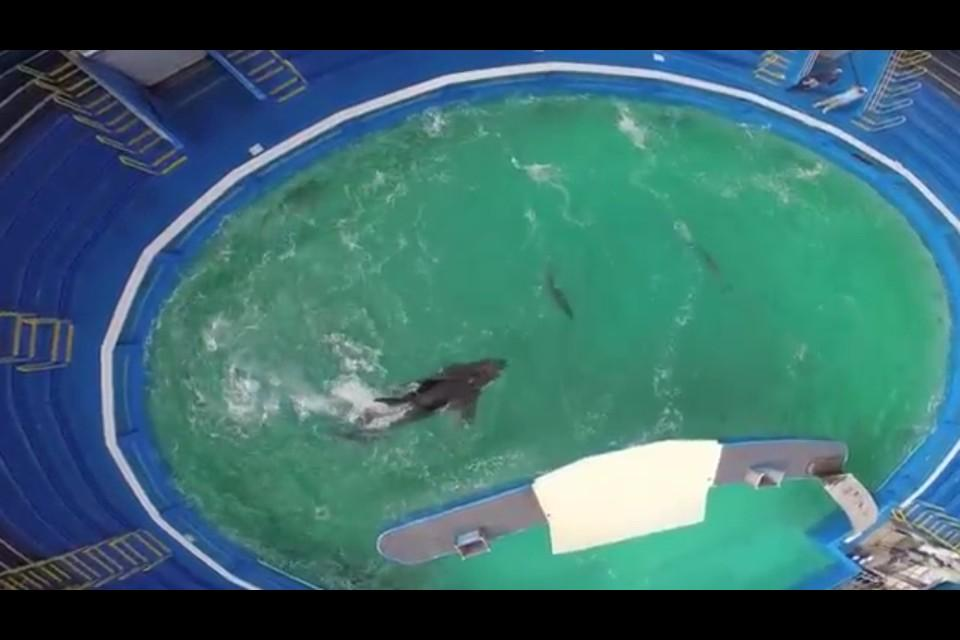 "So wrong. ""NEW: drone footage of #Lolita ... http://t.co/E5VAXz6iNH http://t.co/Mb73G5VBS4""via @jeffrey_ventre @TheOrcaProject"