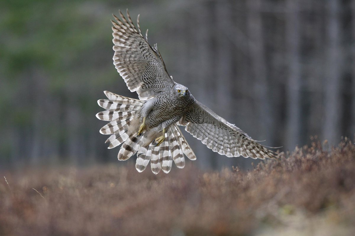 We welcome the 4 month prison sentence handed to convicted goshawk killer George Mutch: http://t.co/rHXhTz6dip http://t.co/TuBtPZBuuB