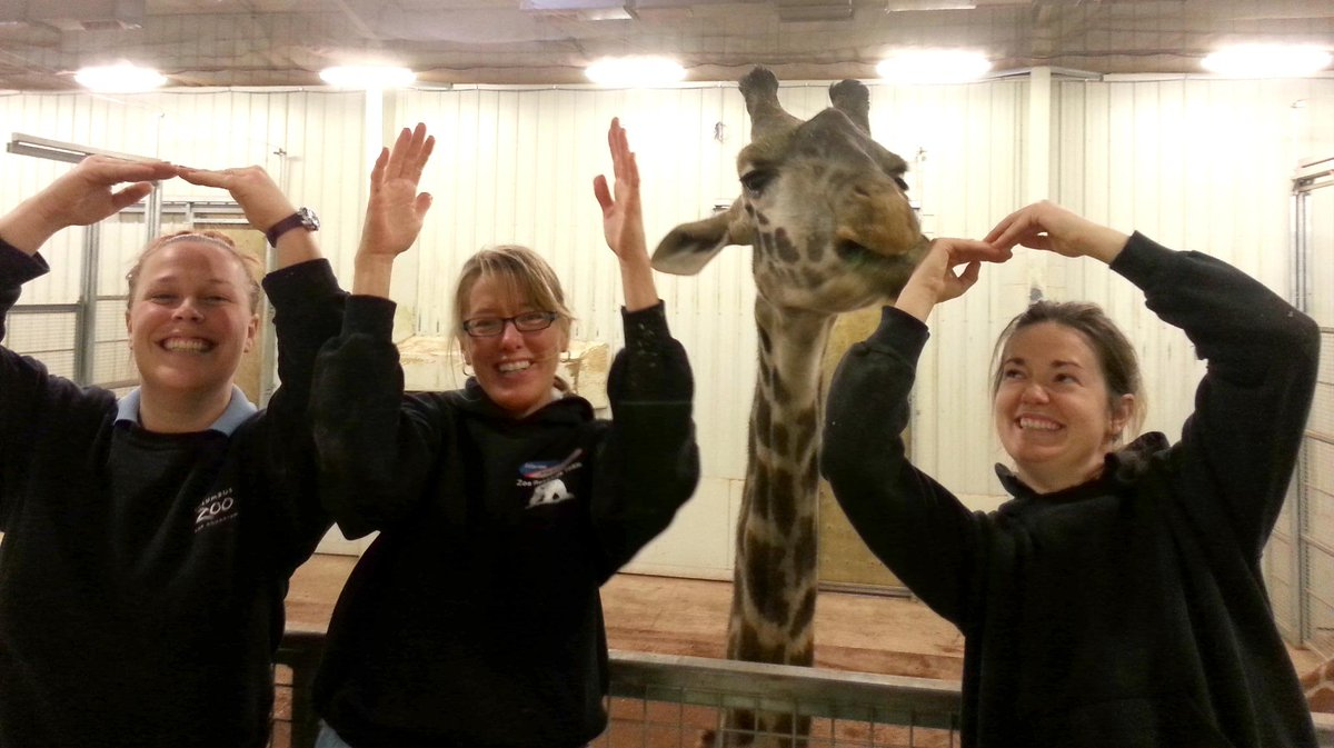 The #ColumbusZoo giraffes are standing tall for the @OhioState #Buckeyes! O-H-I-O! #GoBucks #cbusproud http://t.co/w9UyJiBFaT