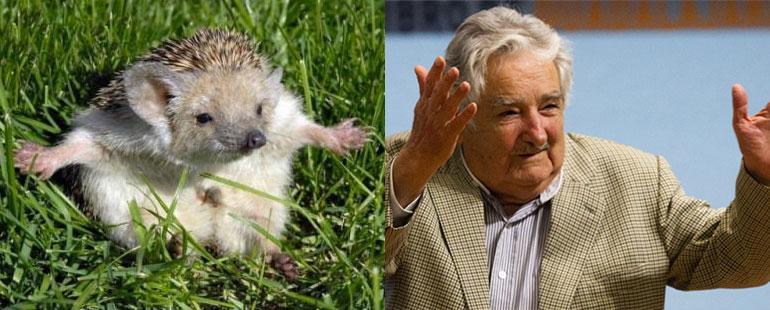 Pepe Mujica y el bebé puercoespín. Separados al nacer! <3 http://t.co/f35WtxjYMu