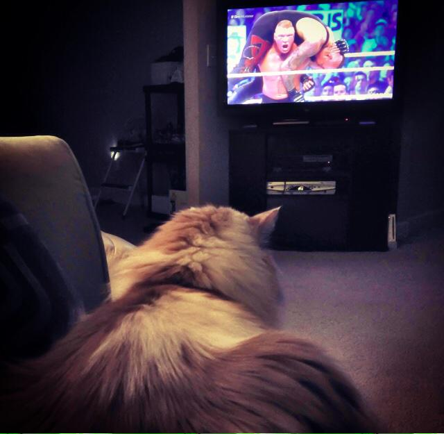 Thomas tuning into #RAW just in time to see @HeymanHustle & @BrockLesnar! & the #MachoMan Hall of Fame announcement! http://t.co/RdUlMaOGay