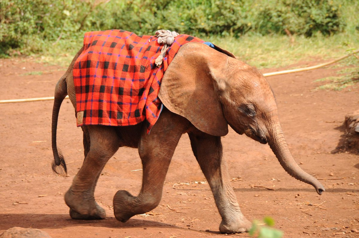 Join @BobGodec & #Kenya's conservationists TODAY from 7PM EAT as we discuss the future of #elephants #Tweet4Elephants http://t.co/qdizwYN3qD