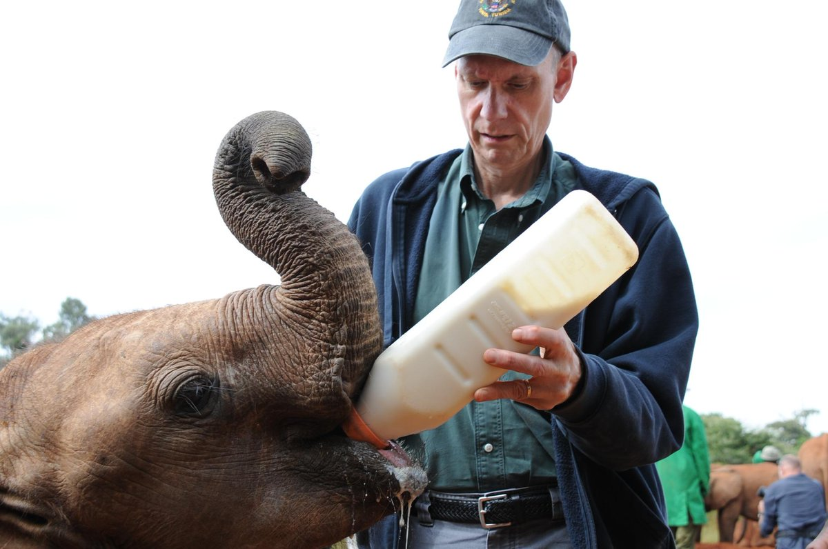 Have a say in the future of elephants JOIN & #Tweet4Elephants w/@BobGodec TODAY 11am ET, 4pm GMT, 7pm EAT RT! http://t.co/iVLXQFQKrU
