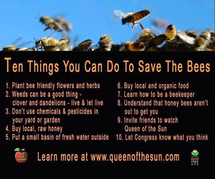 #bees matter. Do your part! #gardenchat http://t.co/PCbDyf09OT MT @SonnyBeez: