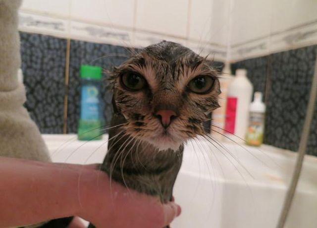 고양이 목욕시켰더니 얼굴이 날아감 http://t.co/z3RhPTyNZB