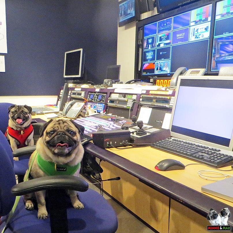 Let's edit some pug videos! @YahooStudios @YahooTV @Yahoo #pug http://t.co/yK1o56LgRV
