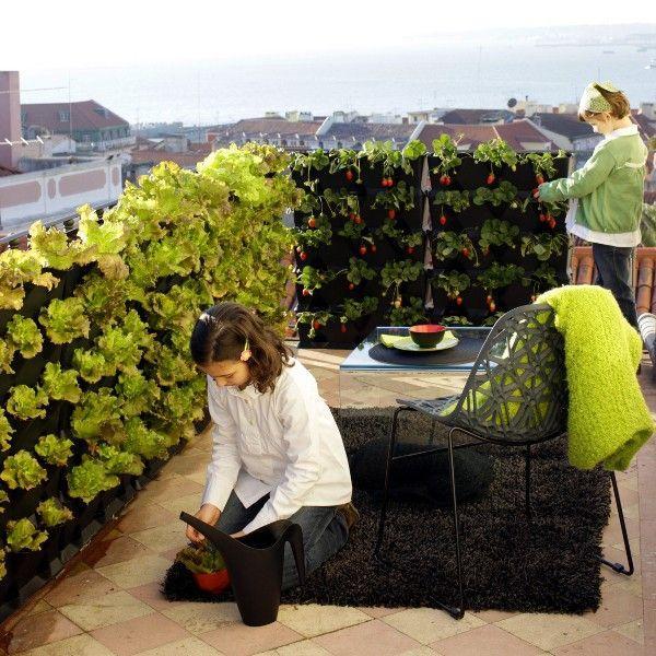 Dak te klein? Denk dan eens aan verticaal #tuinieren...  @vertiplant @Kiemkracht @Gek_op_Groen #daklandbouw http://t.co/D0YKqvvZQr