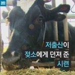 [#카드뉴스] 우유를 만들 수 있는 건강한 젖소 수만 마리가 도살되게 생겼습니다. 출산율이 떨어 지면서 유우소비가 줄고 있기 때문입니다. http://t.co/VDDDRNOD2G http://t.co/rxZqkBnYZk