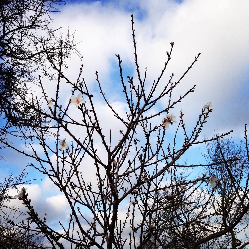 Dann kurz in Erinnerung rufen wie schön es gestern war - z.B. mit den ersten Mandelblüten hier bei Santanyí #mallorca http://t.co/Y5aJW2vpUM