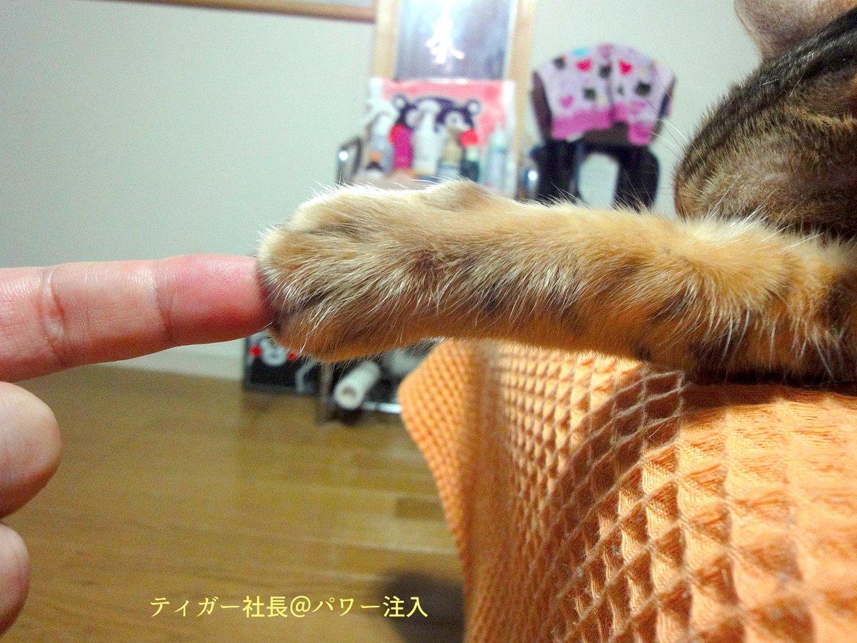 パワー充電ちゅー☆ http://t.co/Uf6aJLQGaa