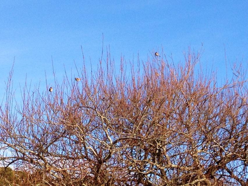 Song birds #Cloonisle #Connemara @CashelHotel @GalwayBuzz http://t.co/hv6DnmAOUZ