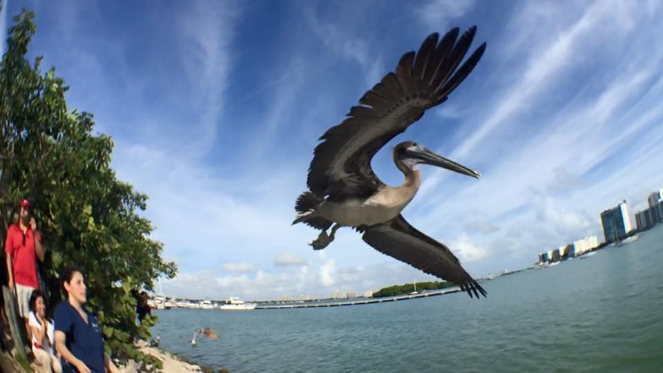 51 free and cheap things to do in Miami this weekend (plus a few more on Monday) http://t.co/5sSk2lyboo http://t.co/kayGGSiDez