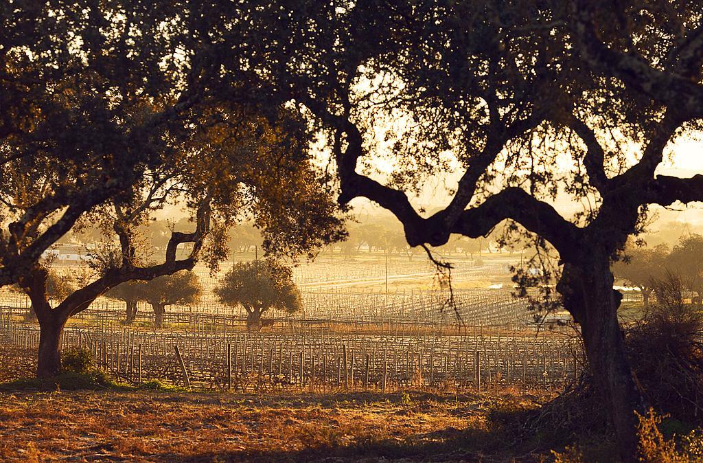 A trip through Portugal's gorgeous Alentejo region. (Photo: James Rajotte for NYT)