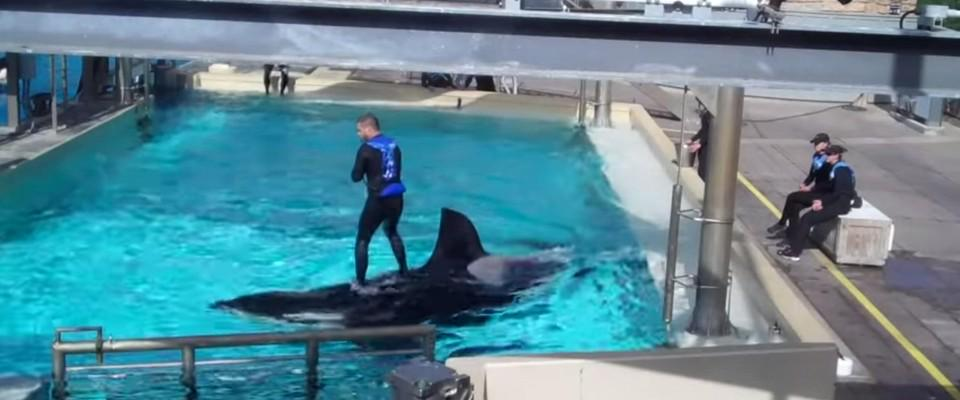 Still in deep denial —> #SeaWorld trainers are (still) using their whales as surfboards http://t.co/k8yJZGw3QI http://t.co/4OzFKy3ITW