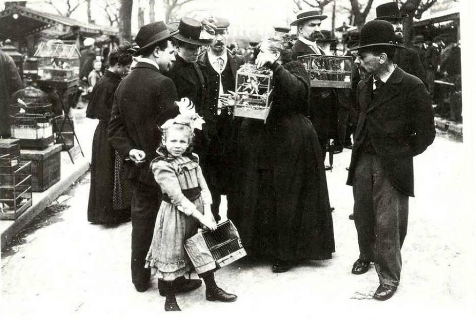Promenade dominicale au Marché aux Oiseaux… Le Marché aux Oiseaux de l'île de la Cité, vers 1900 Photo Paul Géniaux http://t.co/a4G5elGLae