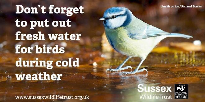 With freezing temperatures likely this week, remember to put out fresh water for birds. Please share. #Winterwatch http://t.co/wkL0E86m3E