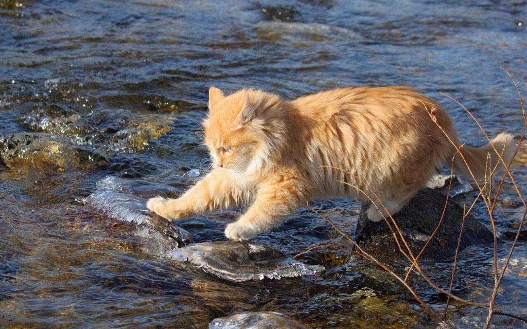 I follow rivers ... #followme ʞɔɐqʍolloɟı# ♪♫~✽.¸♥¸.✽~♫♪ http://t.co/OFDdUB2Wl8 http://t.co/VPWBor2knw