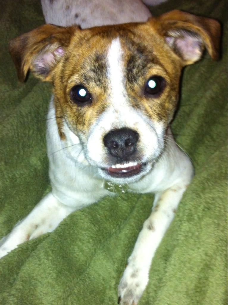 Y'all remember Calvin? Puppy tht almost died? Now named Astro &came 4 a visit! So healthy & happy w/new family! thx! http://t.co/Jw8fr530KC