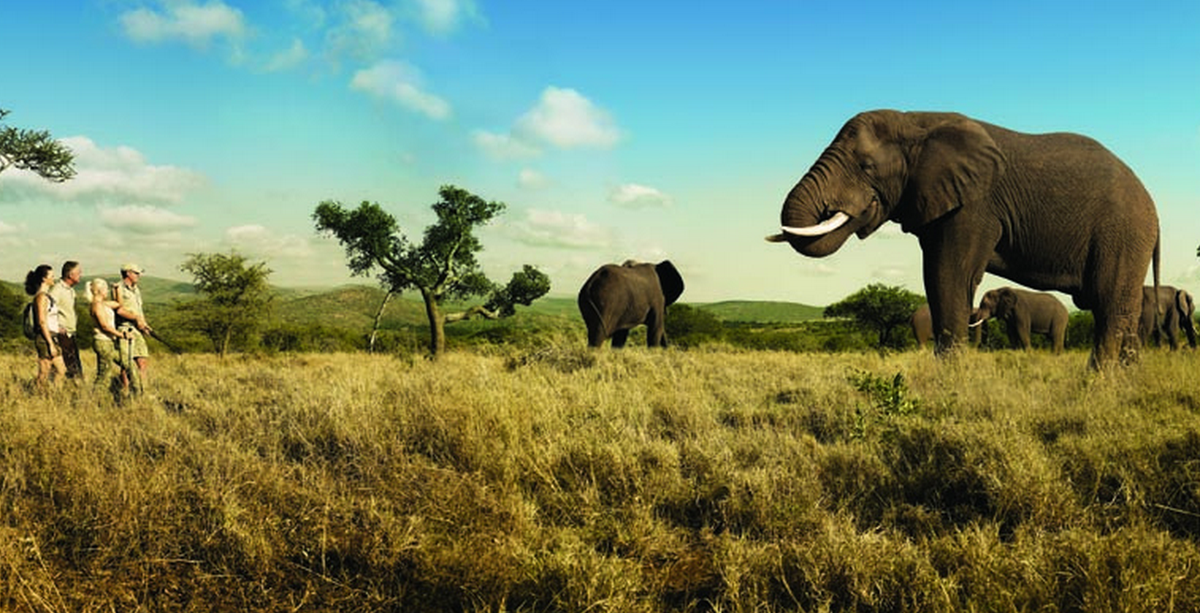 South Africa named world's leading safari destination of 2014: http://t.co/vU0sMxdcjT RT if you're not surprised! http://t.co/gEwtNs8Za5