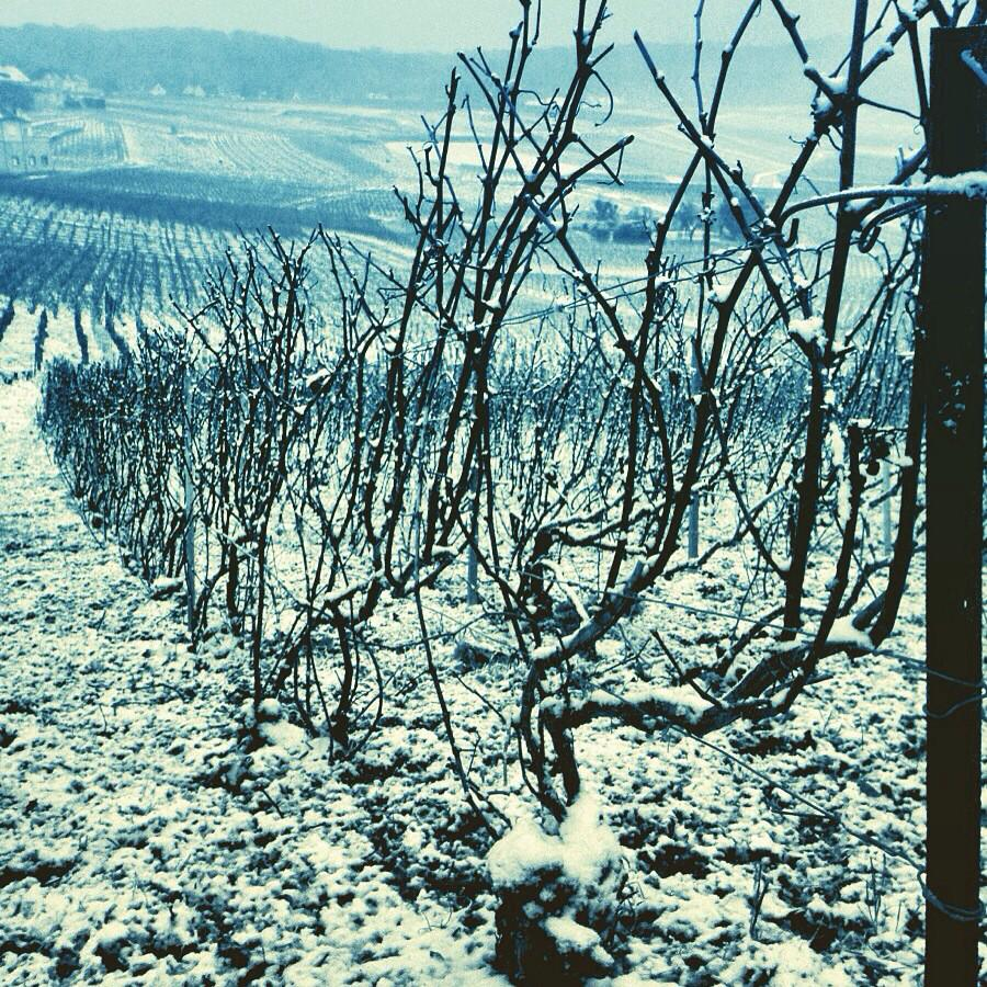 It's snowing in #Champagne http://t.co/0OWCeXaYD2
