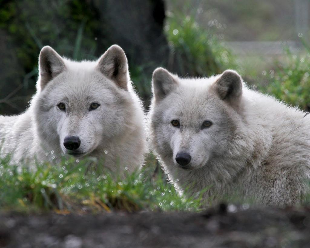 RT @sunshine11852: @pack_of_one Without Magic and the beauty of forest and wildlife we would have nothing. Always #STANDFORWOLVES http://t.co/qBxJm9bMzu