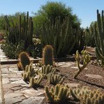 7 things to do in #Phoenix over #SuperBowl weekend, including spending time at @dbgtweet http://t.co/SuDQEAfrGG http://t.co/a5F7ewfSxg