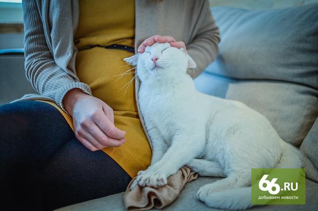 В #екб закрывается котокафе и раздает всем желающим всех своих котиков за бесплатно http://t.co/tffHnvokVK Налетай. http://t.co/p56sXWF9gs