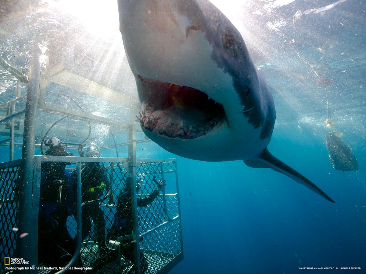 A close encounter with a great white shark in Australia
