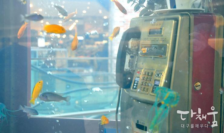 수족관 구경 함께 가실래요?! 못쓰는 공중전화의 변신, 대구 현대백화점 지하 1층에 위치한 공중전화 수족관! http://t.co/NAWyXHqAT3